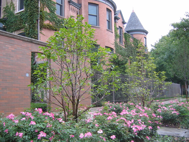Chicago Historic Property 3500 N Janssen - Chicago Rea Estate